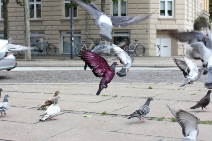 Julius von Bismarck & Julian Charriere Some pigeons are more equal than others. 2012.1